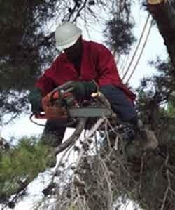 sandton tree cutting