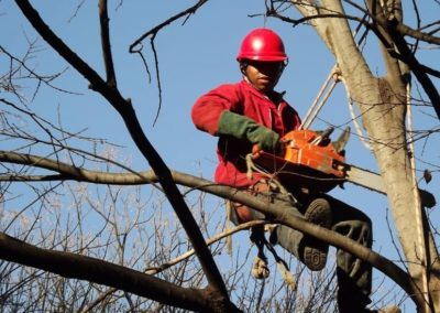 sandton tree felling services