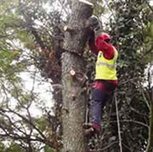 tree fellers bryanston