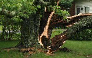 storm damaged tree sandton