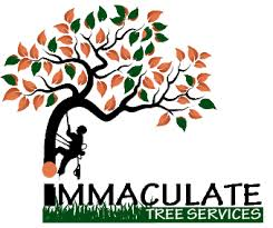 Immaculate Tree Felling